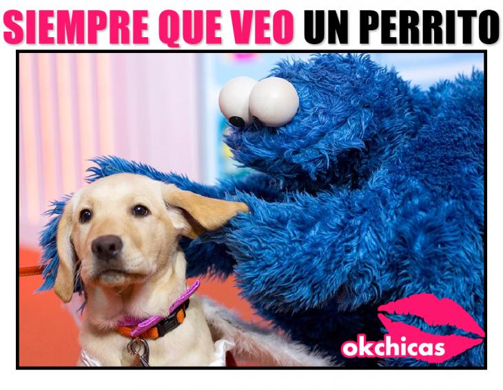 meme ok chicas peluche azul y perro