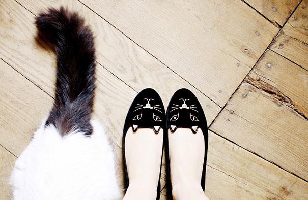zapatos para mujer con figura de gato