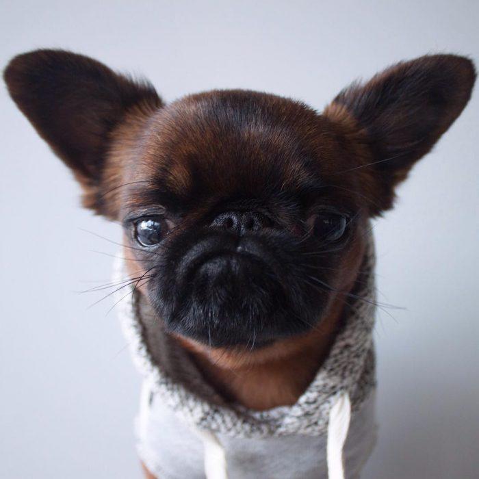 Gizmo el perrito gruñón