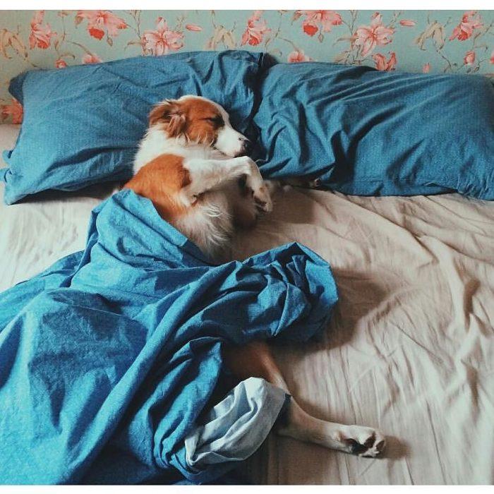 Perro dormido cómodamente en la cama