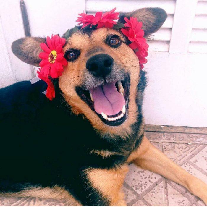 Perro con corona de flores y sonrisa