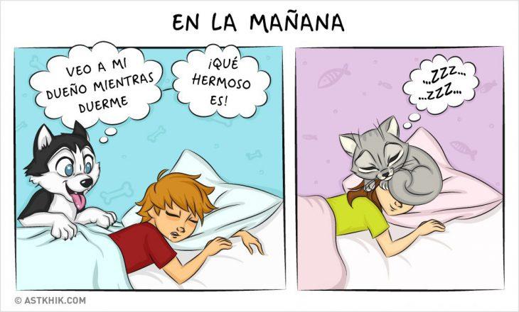 Comic que muestra las diferencias de vivir con un perro y con un gato mientras duermen