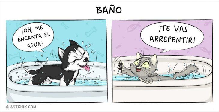 Comic que muestra las diferencias de vivir con un perro y con un gato cuando les das un baño