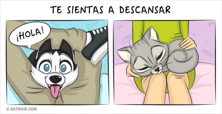 Comic que muestra las diferencias de vivir con un perro y con un gato cuando están descansando