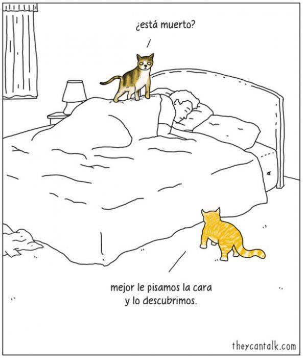 Ilustración de dos gatos brincando en la cama de su dueño