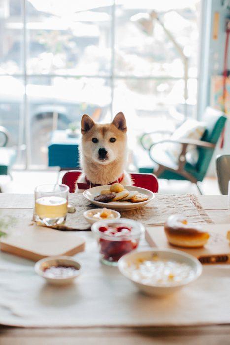 Perro en la mesa viendo la comida