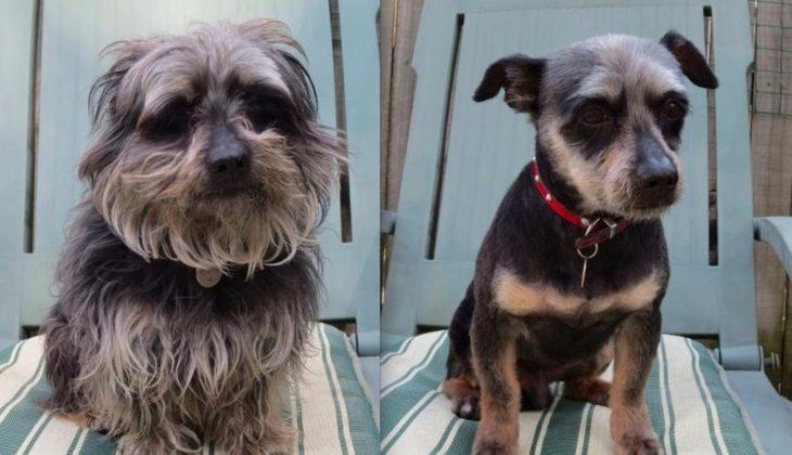 Perro antes y después de corte de cabello