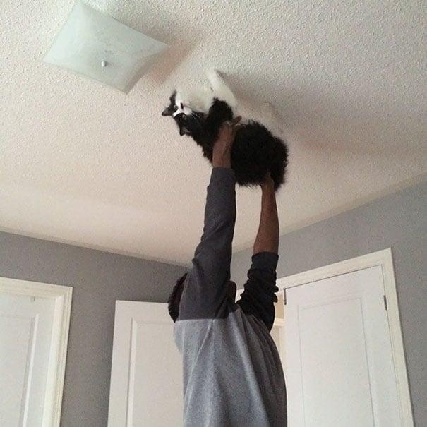 Hombre sujetando a un gato para que camine sobre el techo