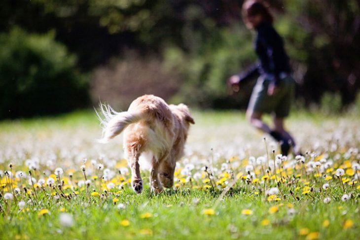 perro caminando sobre un jardín