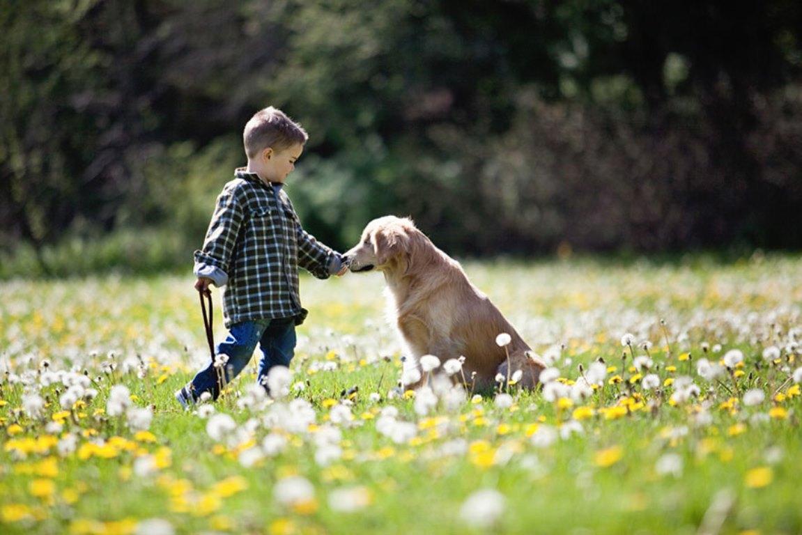 Smiley El Perro Que Naci 243 Ciego Y Ayuda A Los Dem 225 S