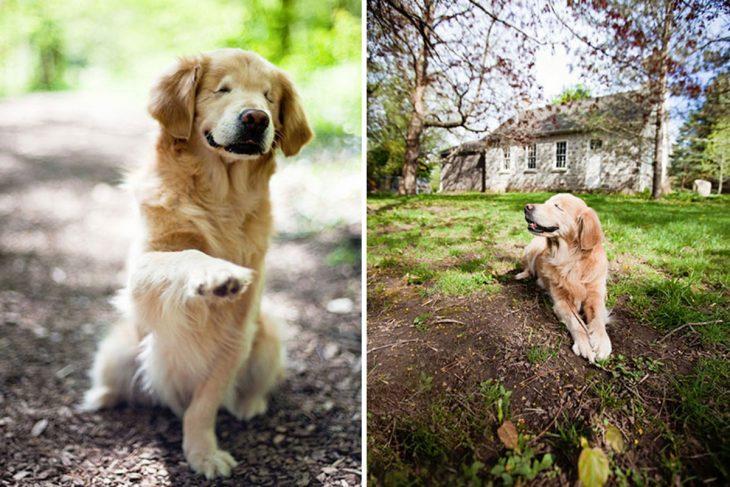 Smiley, el perro ciego de terapia a personas con discapacidades