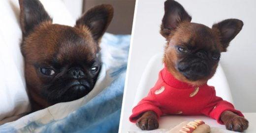 """Conoce a Gizmo, el adorable perrito con """"bitch face"""""""
