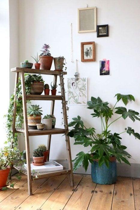 plantas en departamento