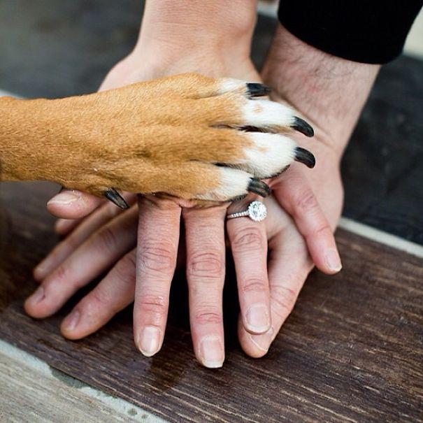 Pareja anunciando su compromiso mientras su perro pone la mano sobre la de ellos