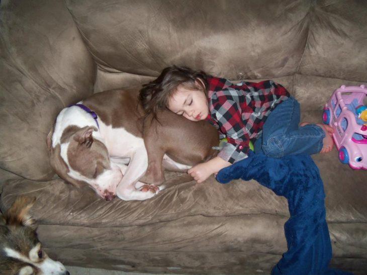 niña recostada sobre perro pit bull