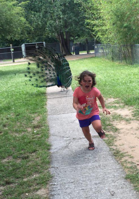 niña perseguida por pavo real