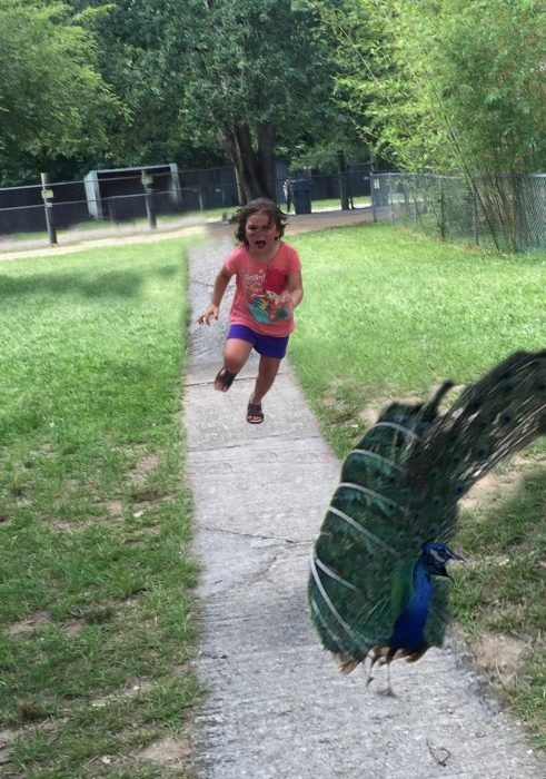 niña persiguiendo un pavo real
