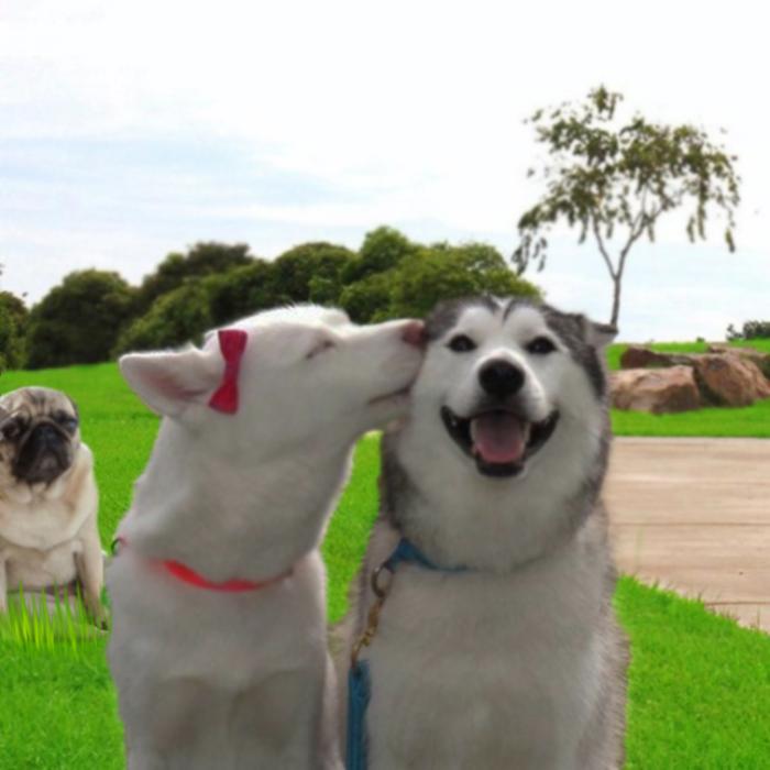 fotografía Reddit perro pug triste editada