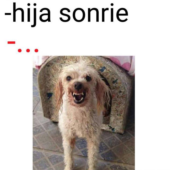 meme perro blanco mojado enojado en casa de perro