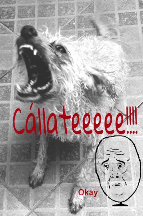 meme perro mojado en el suelo con cara de enojado