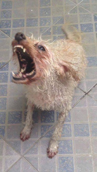 perro mojado en el suelo con cara de enojado