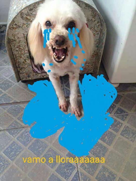 meme perro blanco enojado con lagrimas