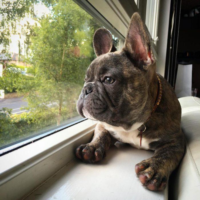 perro mirando hacia afuera de la ventana