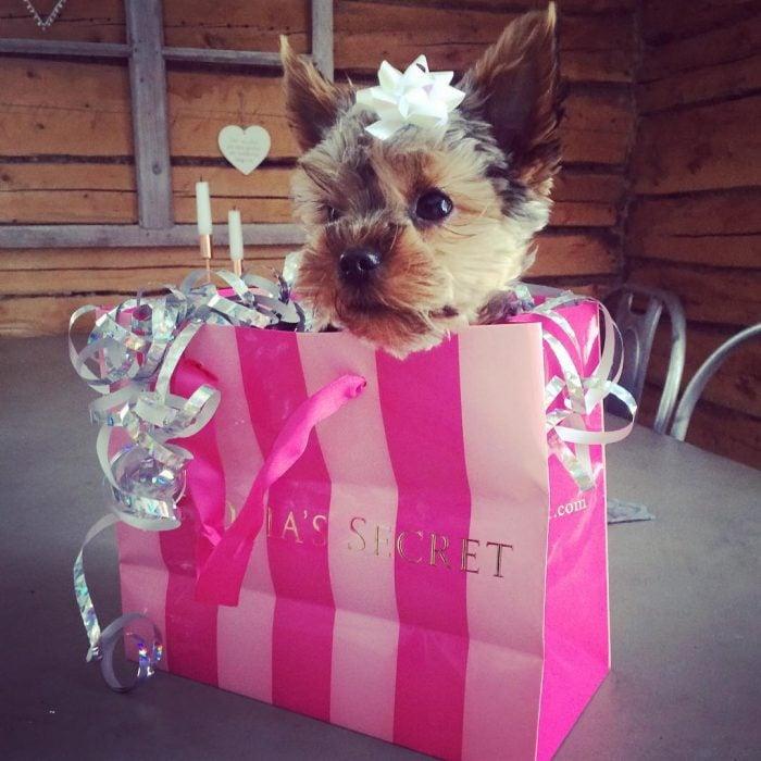 perrito en bolsa de regalo