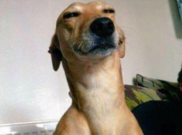 perro con ojos entrecerrados