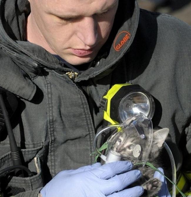 bombero coloca mascarilla de oxígeno a un gato pequeño
