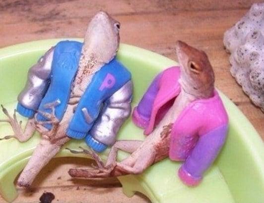 ranas con ropa de muñeca