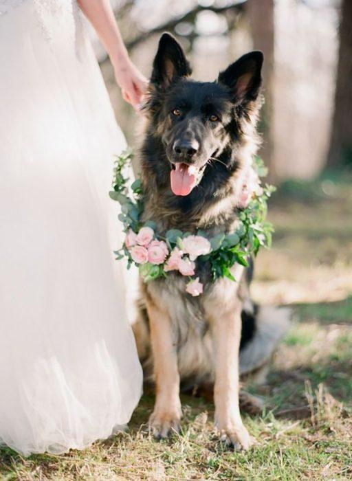 pero en boda con vestido de novia y collar de flores