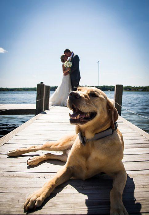 pareja de recien casados en muelle y perro