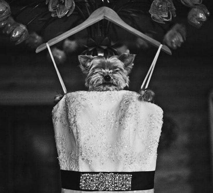 perro con vestido de novia colgado