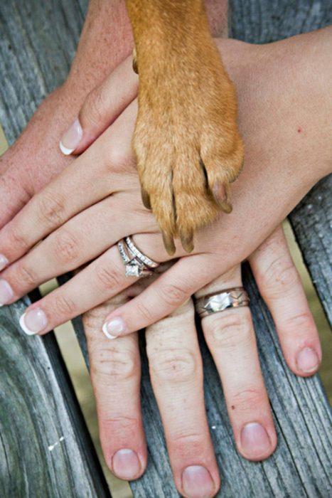 mano de hombre y mujer con pata de perro