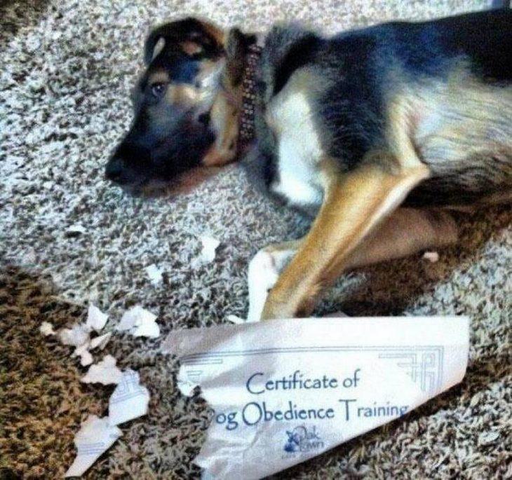 perro triste en el suelo con papel morido