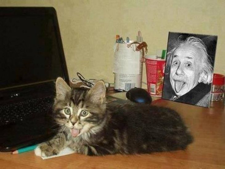 gato con computadora sacando la lengua y fotografia de albert einstein