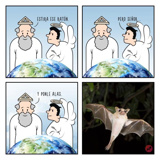 Cómics Dios creó al murciélago