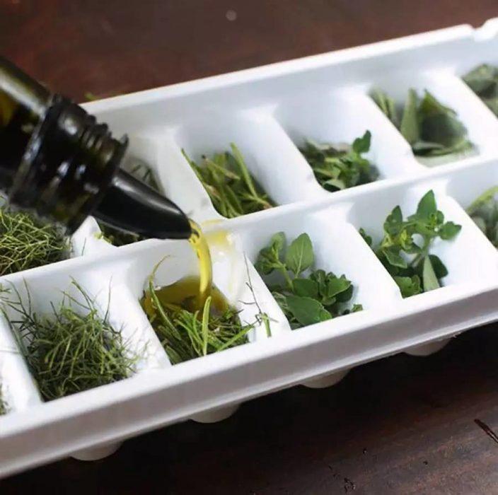 Hiervas conservadas con aceite de oliva en cubos de hielo