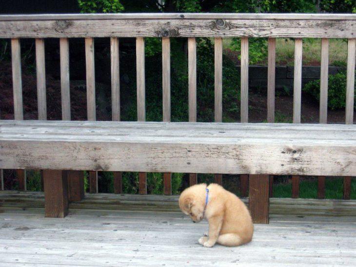 Perro triste sentado a los pies de la banca de un parque