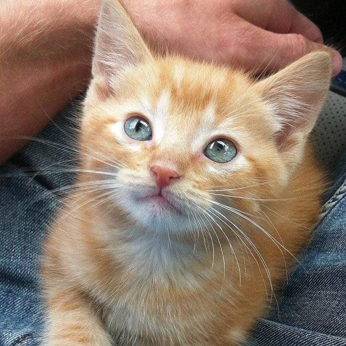 Gato anaranjado pequeño