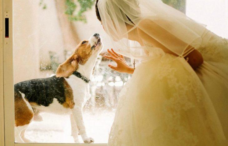 novia agachada con un perro y vestido blanco