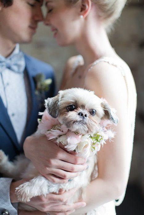 pareja de novios en una boda y su cachorro