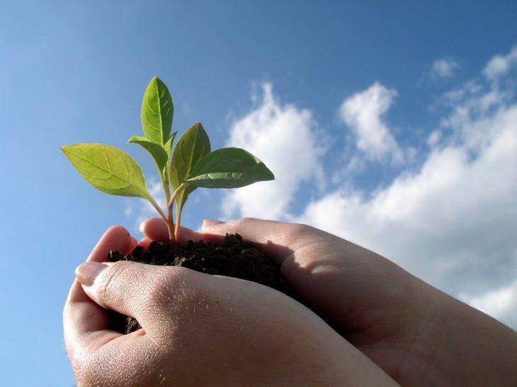 Manos sosteniendo una planta.