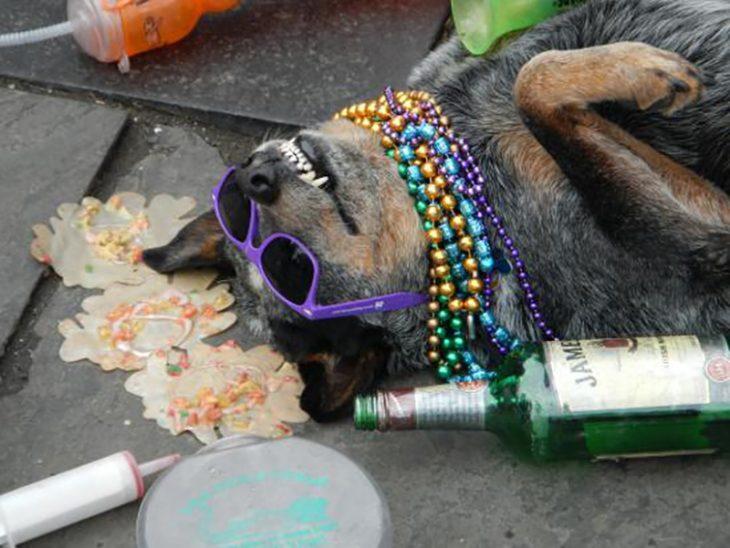 perro se hace el muerto en la calle