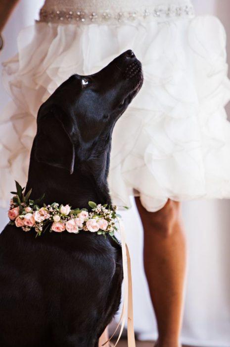 perro negro viendo hacia arriba con collar de flores