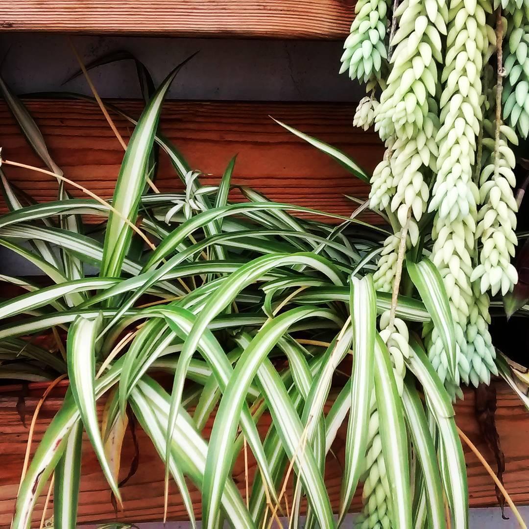 10 plantas de interior que purificar n el aire de tu hogar - Plantas de interior purificadoras del aire del hogar ...
