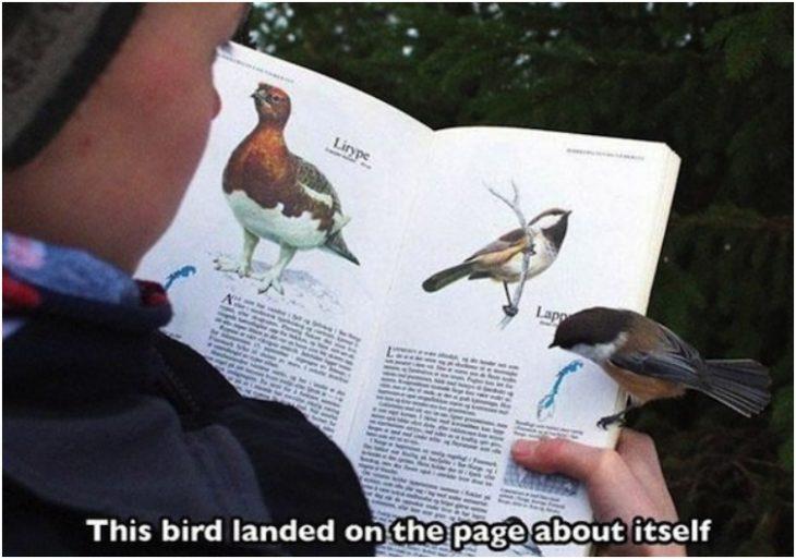 chico con libro de aves y un pajaro en la mano