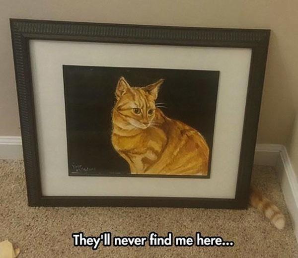 cuadro de un gato y gato escondido atrás se ve la cola