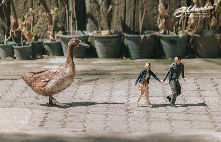 pareja en escenario miniatura con pato